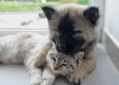 cachorro pastor aleman gato