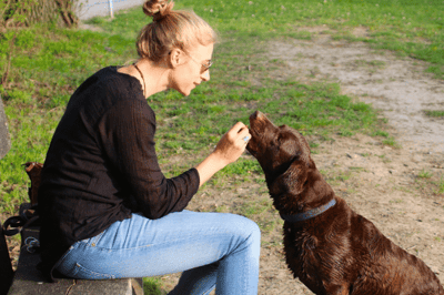 Giving a dog treat