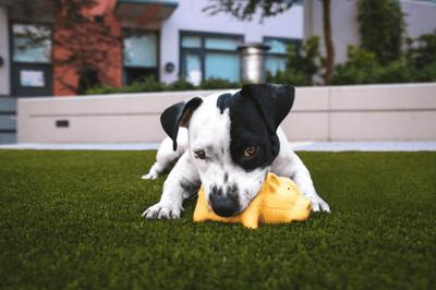 puppy bites toy