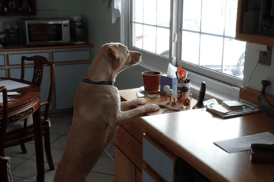 puppy barking at the window