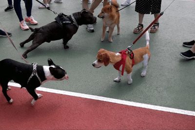 Puppy obedience class