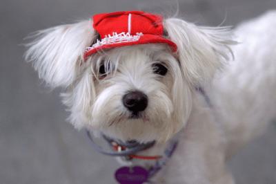 white dog breed