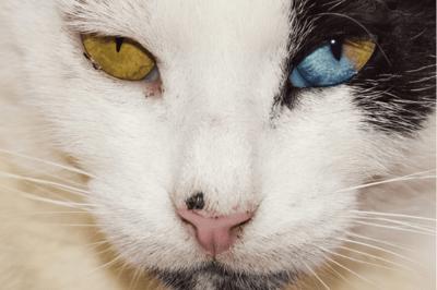 cat nose cancer