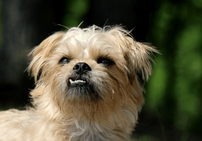 best dogs for busy people
