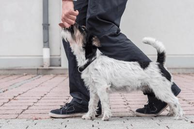 training a dog to heel