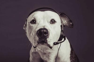 how to teach a dog to speak