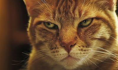 Enfermedades mentales en gatos: por qué aparecen
