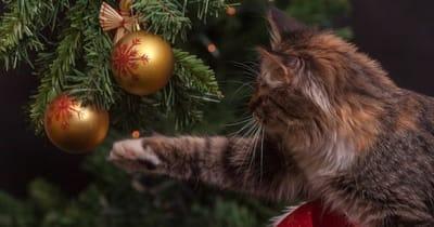 Calendario avvento cani e gatti gatto tocca albero