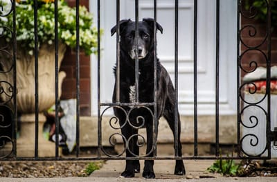 Old dogs are as loyal, affectionate and loving as young dogs.