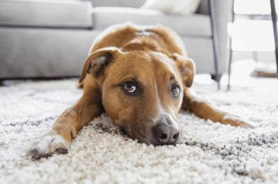 sensitive dog food
