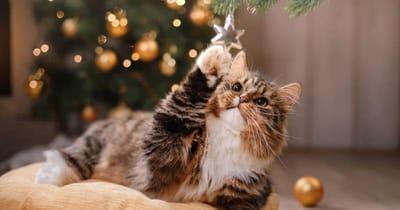 gatto-gioca-con-stellina