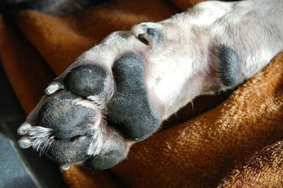What is the best way to cut your puppy's nails?