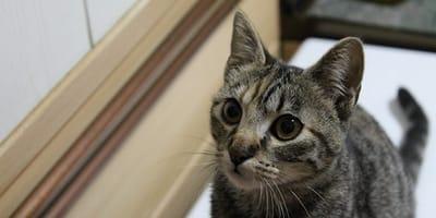 gato mira a pajaro