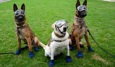 razas perros busqueda y rescate
