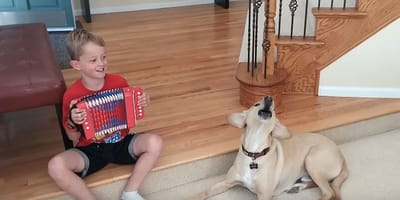 Dog sings along every time his human brings out the accordion