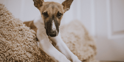 How to pick the perfect bed for your dog