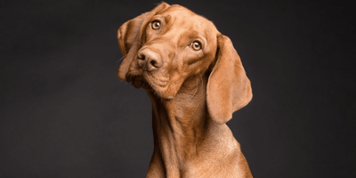 Yellow dog sick: what is it and what does it mean for your dog?