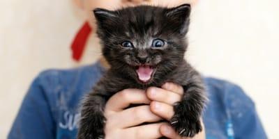 5 cose da non fare mai con un gatto