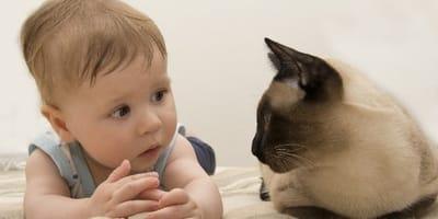Bimbo che parla con gatto
