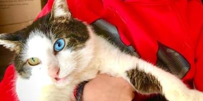 Incredibile: questa gatta ha trovato un padroncino identico a lei!