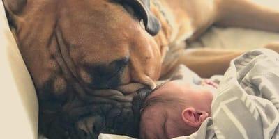 Il bebè piange e il cane ha una reazione inaspettata