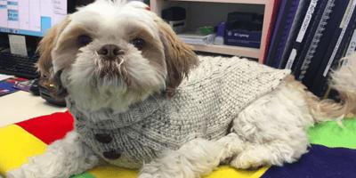 Moon: ecco il cane australiano che ha adottato 74 micetti