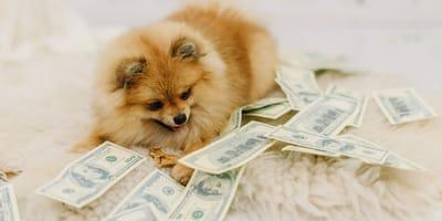 Cane di taglia piccola circondato da soldi