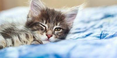 Perché il gatto fa l'occhiolino?