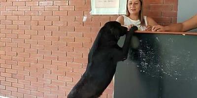 Questo cane ha capito cosa fare per avere un biscotto
