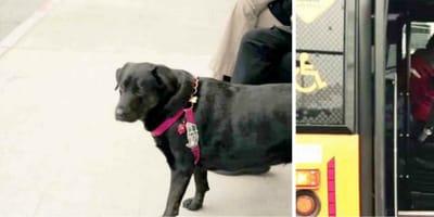 Il padrone non vuole portare il cane al parco, ma lui trova la soluzione! (Video)
