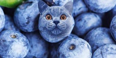 I gatti mimetizzati nel cibo che stanno facendo impazzire tutti