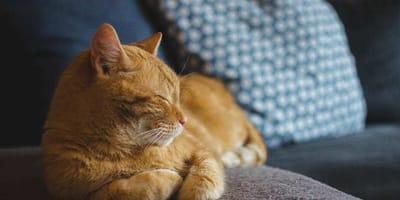 Tranquillanti per gatti: rimedi contro ansia e stress