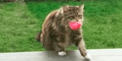 gatto con fiore in bocca