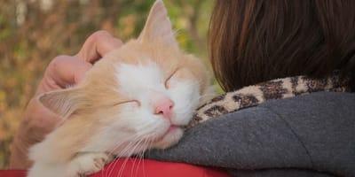 gatto su spalla della padrona