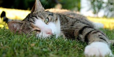 gatto soffre il caldo