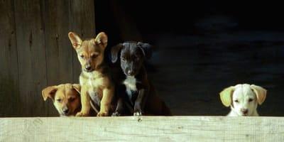 cani davanti un muretto