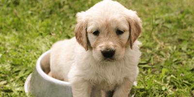 Quando bisogna dare gli integratori per cani?