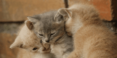 gattini da acquistare