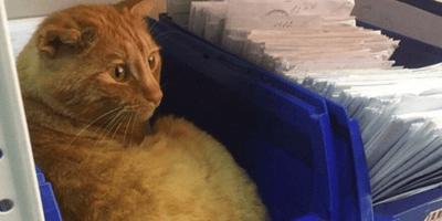 gatto-rosso-accanto-a-lettere