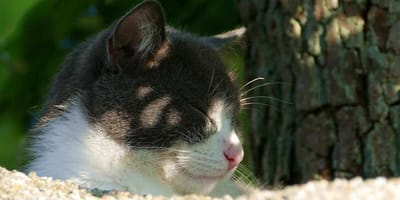 gatto all'ombra