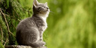 gatto fissa il cielo