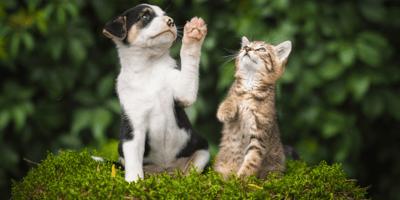 gatto adulto e cane cucciolo