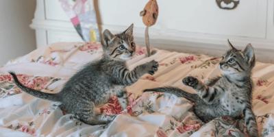 I migliori giochi per gatti piccoli