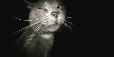 gatto al buio