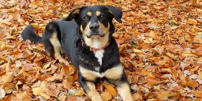 cane su foglie autunnali
