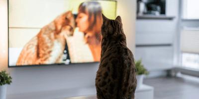 gatto davanti alla tv