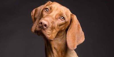 I falsi miti sulla castrazione del cane