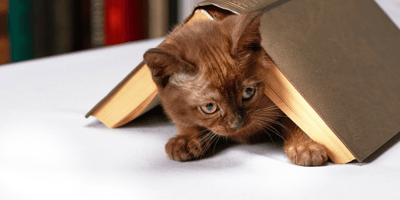 gatto nascosto sotto un libro
