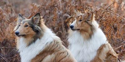 cani nel bosco