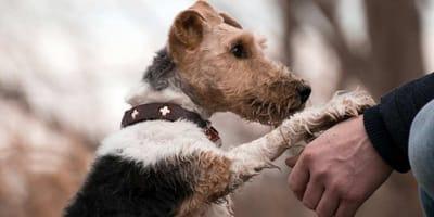 Warum humpeln und hinken Hunde?
